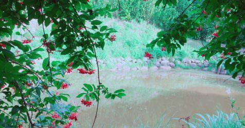 新竹新埔 | 福祥仙人掌與多肉植物園 IG網美的打卡聖地 台灣的美麗沙漠